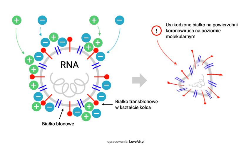 dezaktywacja koronawirusa przez technolgoię Plasmacluster